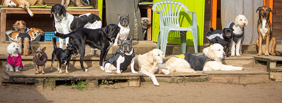 hundplus – Hundetagesstätte für Bonn und Umgebung